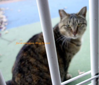 daishi-cat.jpg